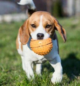Дрессировка собак и щенков, коррекция поведения.