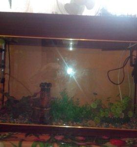 Большой аквариум со всеми необходимыми прибомбасом