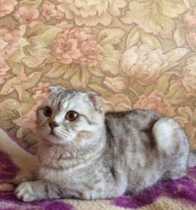 Котик ищет невесту для вязки
