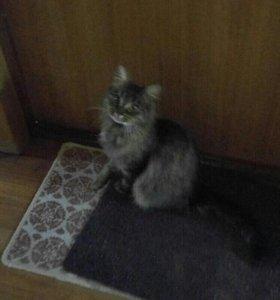 Кошечка ищет дом!