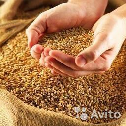 Полнорационные комбикорма, зерно фуражное, жом