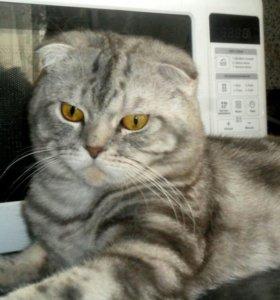 Вязка с шикарным котиком
