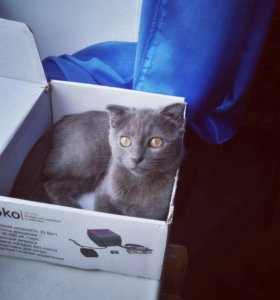 Кошечка ищет кота вязка
