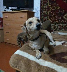 Отдам в хорошие руки собаку.