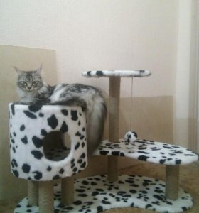 Новый домик- когтеточка для кошек/котов