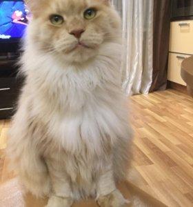 Злющая кошка Вася