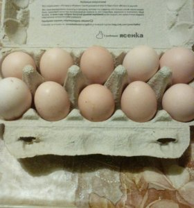 Яйцо домашнее