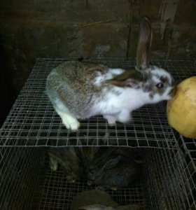 Кролики и кормушки