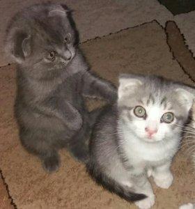 Прекрасные котята