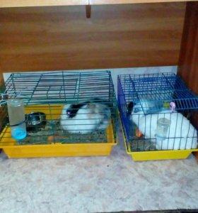 Принимаю заявки на декоротивных крольчат