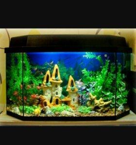Обслуживание, дизайн, установка аквариумов