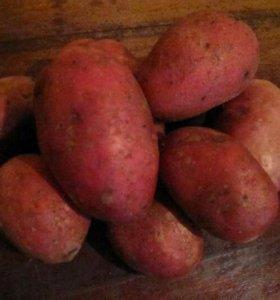 Картофель деревенский без химии
