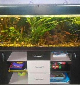 Продаю аквариум с тумбой