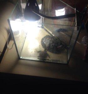 Красноухая черепаха.Цена вместе с аквариумом.Рядом