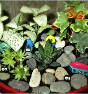 Для интерьера мини-сад