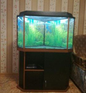 рыбки или растения!