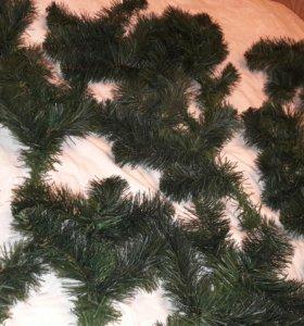 Ветки елки