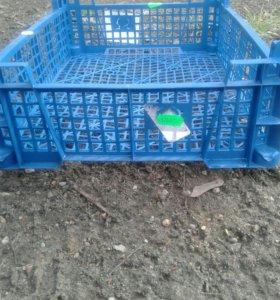 Ящики для грибов
