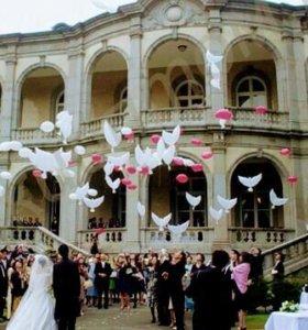 Шары-голуби. Свадебные шары.