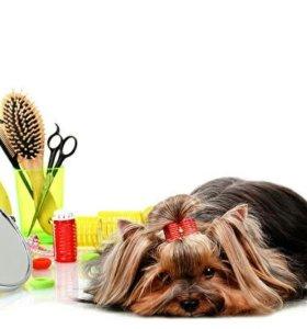 Стрижка собак и кошек  9856910300