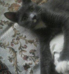 Котик Том