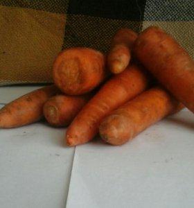 Морковь сочная