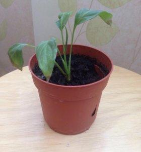 Растение в горшочке