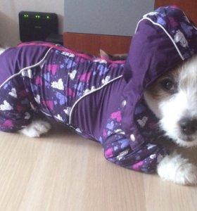 Комбинезон для собаки ( небольшой) или щенка