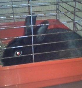 Крольчиху