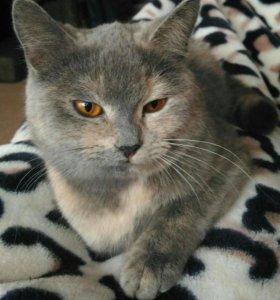 Красивая и умная кошка