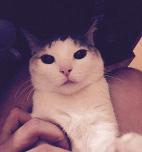 Возьму кошку от 1 до 5 месяцев(девочку)