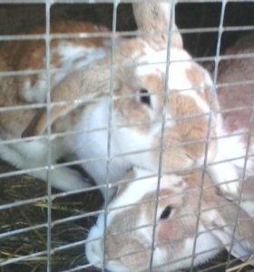 Крольчихи (крытые)