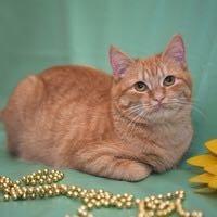 Кошечка- подросток в дар