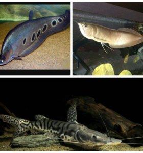 Три рыбы на внешний фильтр