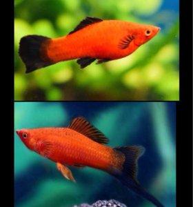 Аквариумные рыбки (малёк), улитки