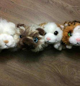 Кошечки The Cat collection