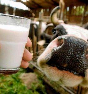 Домашнее коровье молоко,творог,сметана,сливки,масл