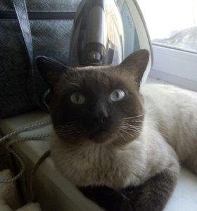 Нашли кота район дом быта