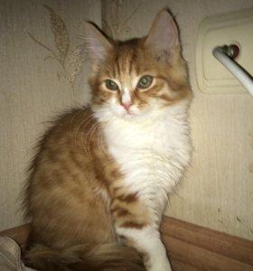 Котенок ищет дом!!!