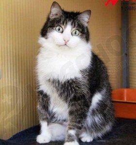 кошка Мики с 2мя особенностями