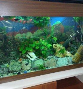 Продам аквариум 170 л.