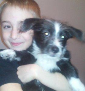 Пропала собака в районе 8 школы