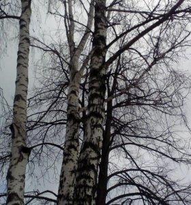 Спил и вывоз деревьев любой сложности
