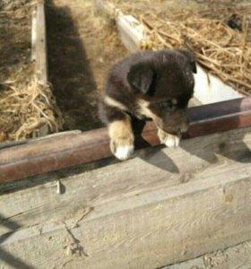 Найдена собака, отдадим в хорошие руки
