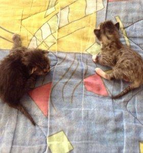 Котятки новорождённые