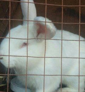Кролики 1 год