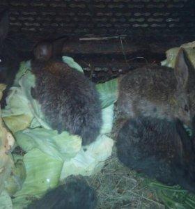 Кролики маленькие