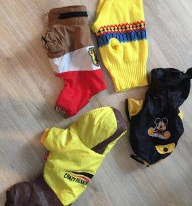 Одежда для собак той терьер