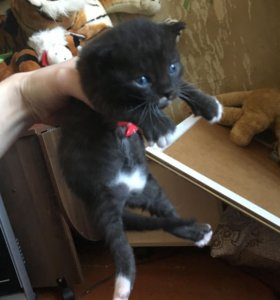 Котята малыши