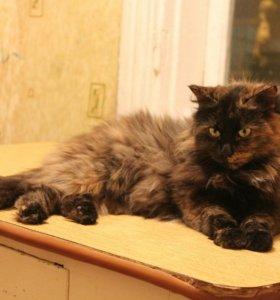 Кошка Несмеяна в добрые руки!